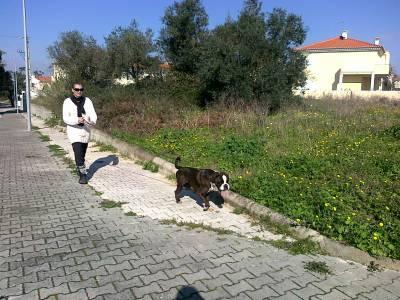 Petsitting de cães gatos aves répteis e peixes