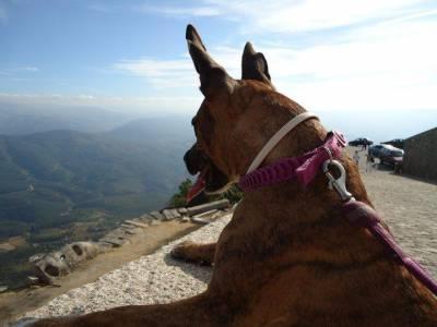 Pet-sitting e dog-walking Malveira eMafra