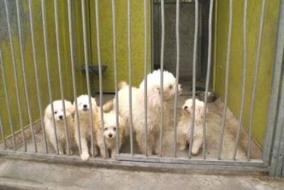 Vende-se Cachorras