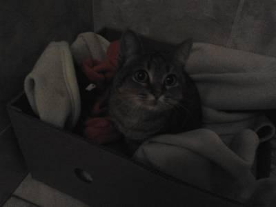 Gato ou gata encontrado na Amora-Seixal