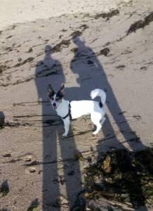 Jack Russel Terrier Macho - Para monta
