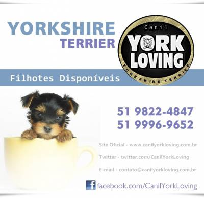 Yorkshire - Portal do Filhote RS