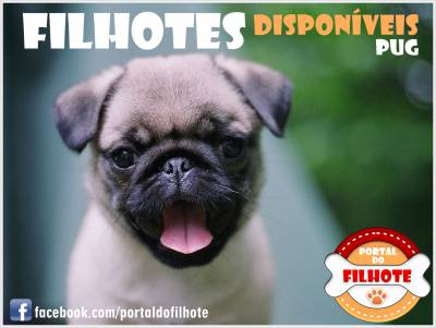 Pug - Portal do Filhote RS