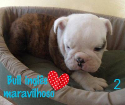 BULLDOG INGLES INCRIVEIS PARC CARTAO