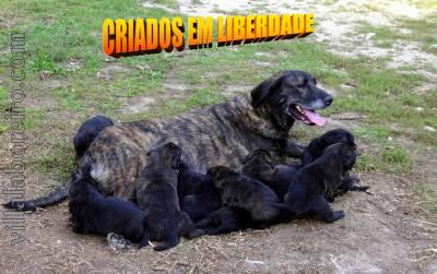 VILLA LABOREIRO - DEDICAÇÃO RIGOR E EXCELÊNCIA