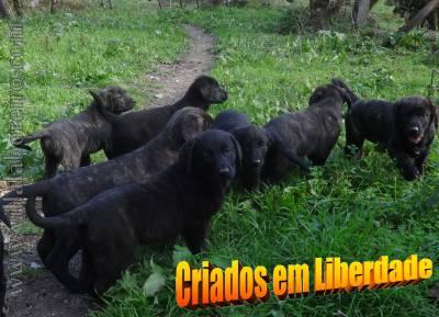 Castro Laboreiro-Um Dos Tesouros Vivos de Portugal