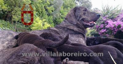 Villa Laboreiro - Somos Portugal