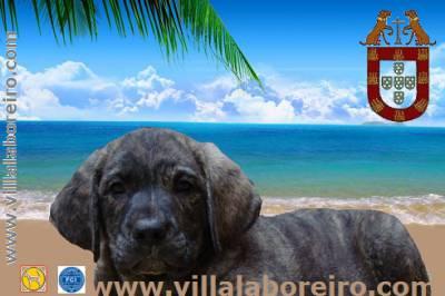 Villa Laboreiro - UMA QUESTÃO DE ADN