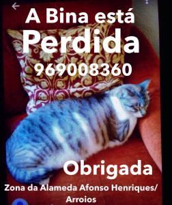 A Bina está perdida