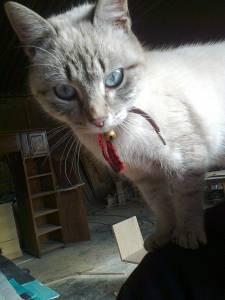 Procuro Gatinha perdida em Chaves
