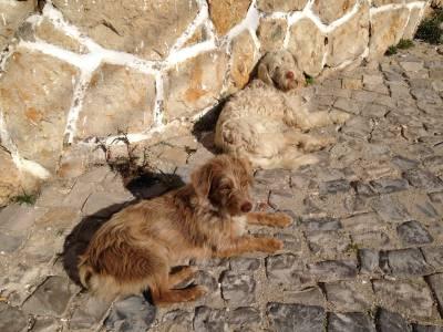 cães perdidos