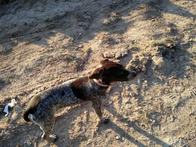 Cadela desaparecida em unhos