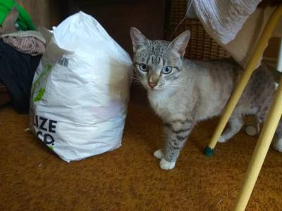 Gato encontrado perto da  CONFORAMA V N Gaia