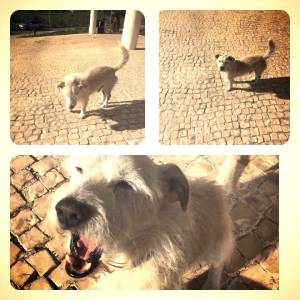 Cão desparecido