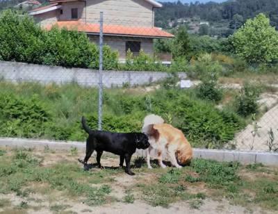 Hotel Canino Penafiel