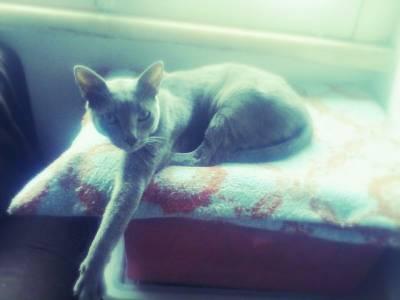 Gato perdido