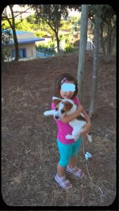 Macho - Jack Russell Terrier - Raça Pequena