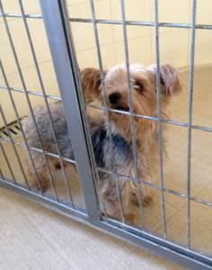 cão encontrado no Picao Gradil Mafra