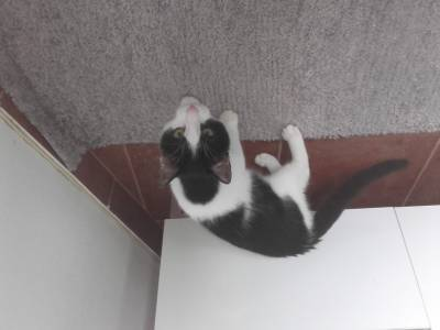 Camões - gato desaparecido