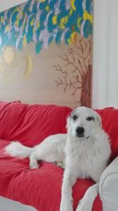 Pet Sitting e Treino Canino
