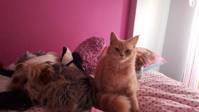 Namorado para gata Bosques da Noriega
