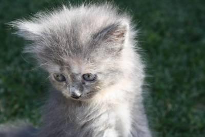 Fotos de Gato - Galeria Persa Siames Filhotes Engraçadas Raça