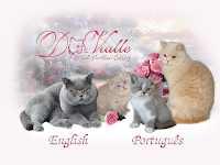 D Vialle British shorthair